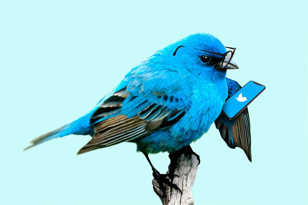 A blue bird holding a mobile phone with Twitter logo.